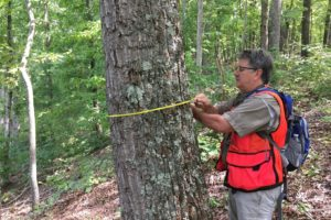 Kevin Hoyt measures a tree trunk