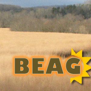 Bio-Based Energy Analysis Group