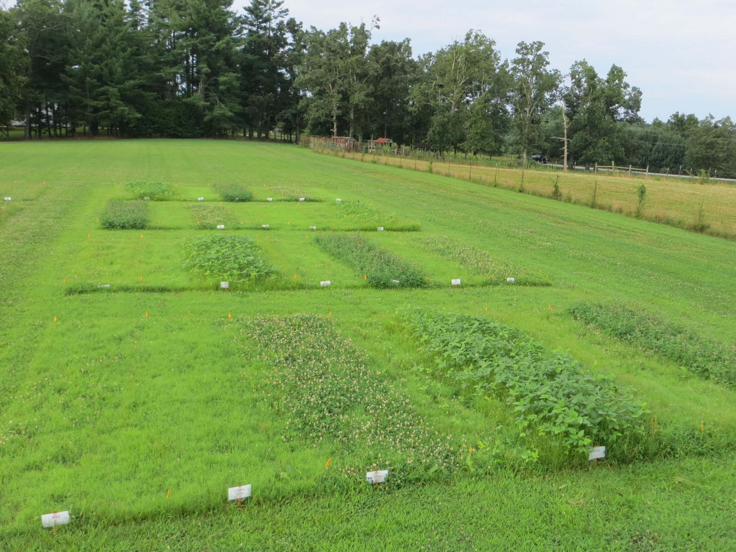 Forage Research Plots