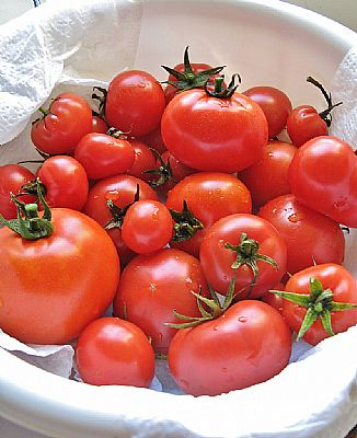 tomatoes in bucket