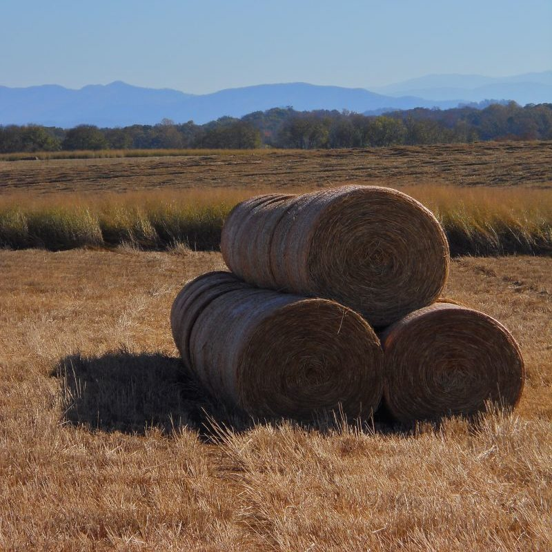Switchgrass Bales
